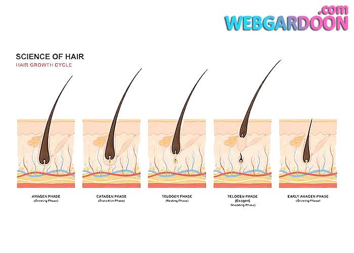 چه عواملی باعث ریزش مو در خانم ها می شود؟