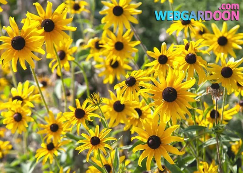 معرفی 12 گیاه برای باغچه های آفتابگیر